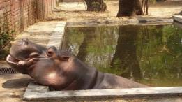 Gustavito en su piscina