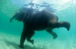 Elefante debajo del agua