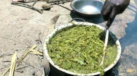 Woman cooking grass and leaves