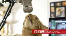 Kitten Academy live stream