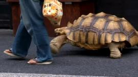 Hisao Mitani with pet tortoise Bon-cha
