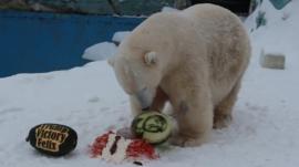 Felix the polar bear