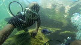Underwater, Lake Malawi