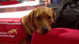 Dogs Trained To Detect Diabetes In Australia