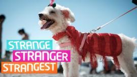 Strange Stranger Strangest