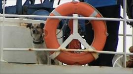 Baltic the dog on a ship