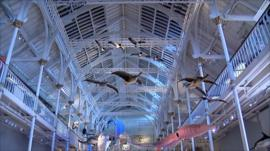 A display in the National Museum of Scotland