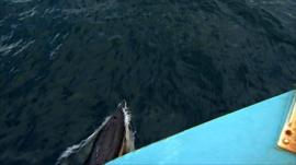 A dolphin surfaces next to a boat