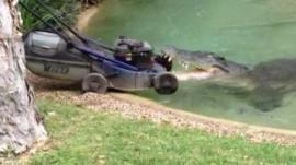 Crocodile attacks lawn mower