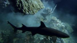 Sharks feeding in a cave