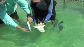 Magnet test on shark