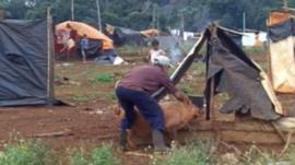 Paraguayan farmer with a pig