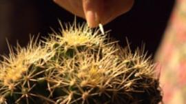 Cactus at the Proms