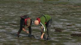 Environmentalists working on seagrass beds