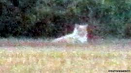 Image of 'lion' in St Osyth