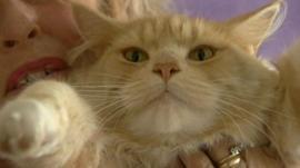 Teddy Bear may be the St Osyth big cat