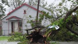 Uprooted tree in New Orleans