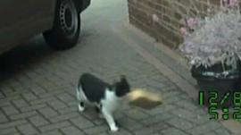 Cat carrying item