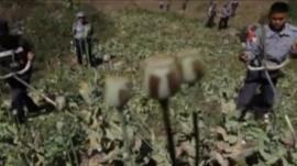 Opium fields in Burma