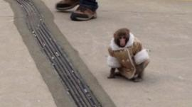 Monkey in a jacket
