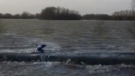 Seal in Fen Drayton Lakes; video copyright Robjn