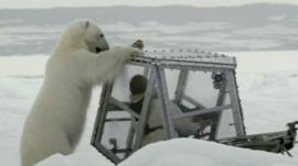 Polar Bear and Gordon Buchanan