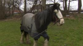 Horse in Tipton