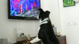 Dog watching Dog TV