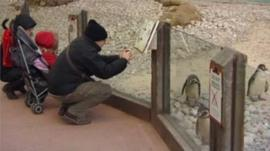 A penguin enclosure