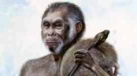 Was this a homo erectus that shrank?