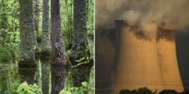 Trees in the US and cooling towers at Drax power station in the UK