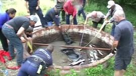 A horse trapped in a well
