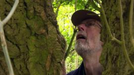 Steve the tree hunter