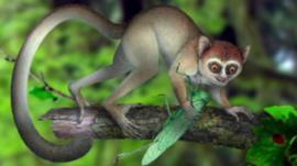 Ancient monkey-like creature