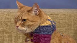 Bob the Cat on The Andrew Marr Show