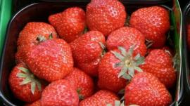 Strawberries (generic)
