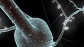 single neuron