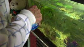 Elderly man feeding fish in tank