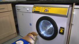 Dog opening washing machine