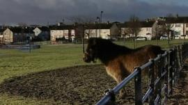 Illegally untethered horse in Bradford
