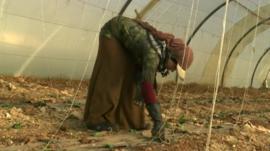 Child worker in Syria