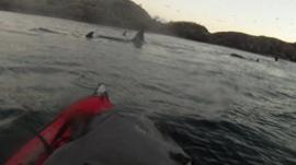 Whales and kayak