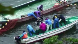 Fisherman slaughter dolphins