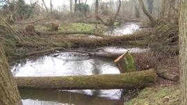 Trees felled into the River Nar in West Norfolk