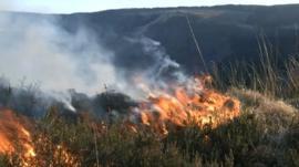 A grass fire