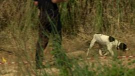 A sniffer dog moves through scrubland