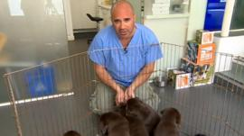 TV Vet Marc Abraham with puppies