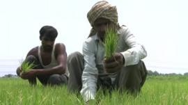 Farmers in Uttar Pradesh