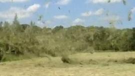 Dust devil near Bristol