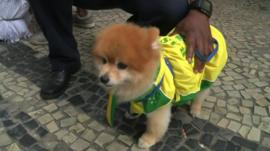 It is not just the humans who are supporting Brazil